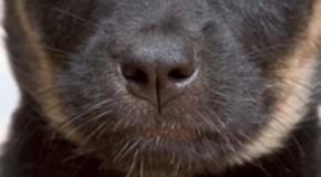 Spürhunde erschnüffeln Schimmelbefall