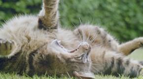 Futtermittelallergie bei Katzen