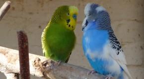 Vogelallergie