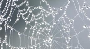 Insektenallergie – Spinnen