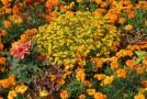Gartenarbeit trotz Allergie