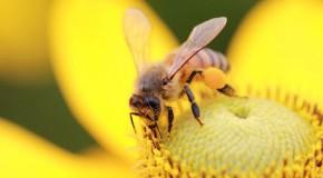 Insektenstiche vermeiden