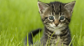 Haustiere für Allergiker