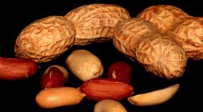 Erdnussallergie ist weiterhin auf dem Vormarsch