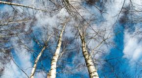 Baumpollenallergie – was können Sie dagegen tun?