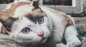 Tipps bei einer Katzenhaar-Allergie