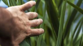 Dyshidrose – lästige Bläschen an Fingerinnenseiten, Händen oder Füßen