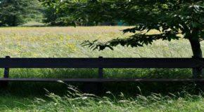 Zeckenschutz: Ist er notwendig und was sollten Allergiker beachten?