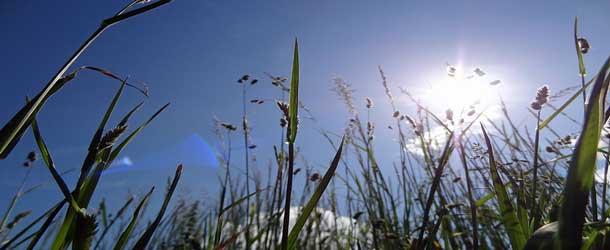 Atopie: Neigung zu Überempfindlichkeitsreaktionen und Allergien
