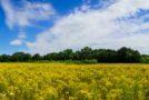Allergien verhindern: Ist Prävention möglich?