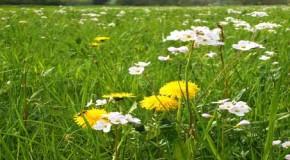 Warum Allergien immer häufiger werden