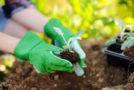Allergie-freie Gartenarbeit