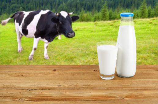 Viehfutter beeinflusst Milchallergie