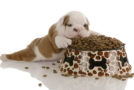 Futtermittel-Allergie bei Hunden