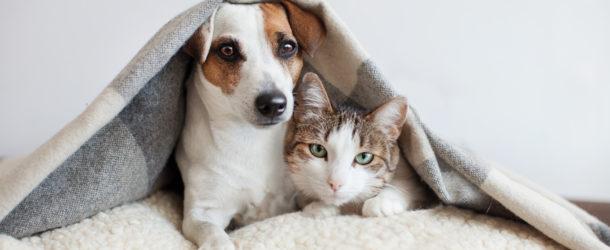 Haustiere und Zeckenallergie
