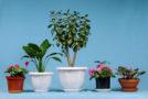 Saubere Luft durch Zimmerpflanzen